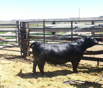 Image Y4 Ranch